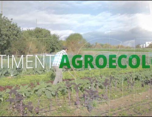 Què podem fer per consumir aliments ecològics de proximitat a les activitats de l'esplai?